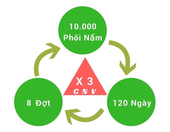 mô hình trồng nấm bào ngư xám công nghệ cao