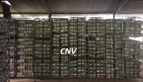 trang trại trồng nấm cnv