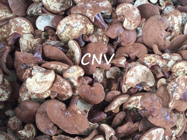 rủi ro khi trồng nấm linh chi