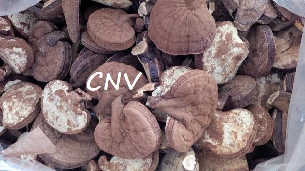 thị trường tiêu thụ nấm linh chi