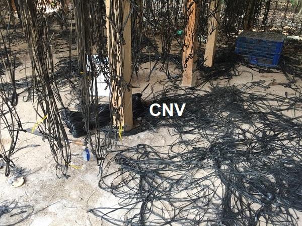 bảo trì trại trồng nấm bào ngư