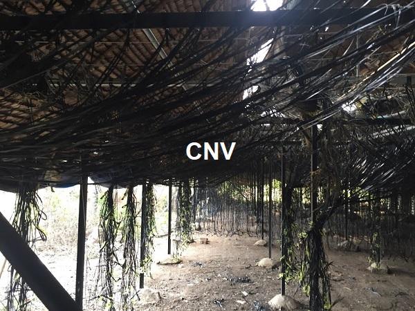 Cách làm trại trồng nấm