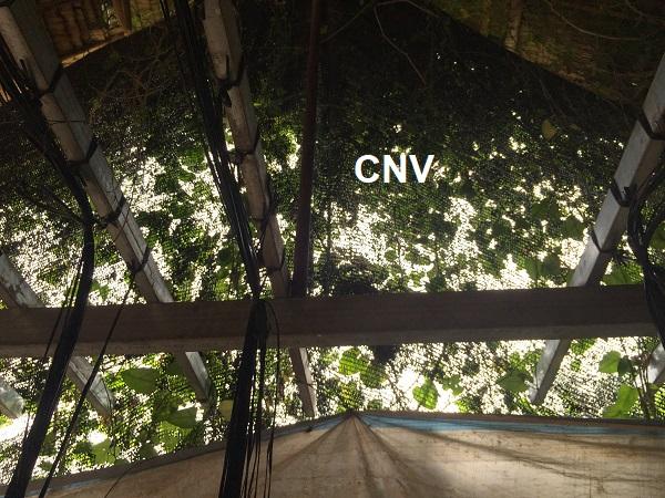 giăng lưới tránh côn trùng nhà trồng nấm