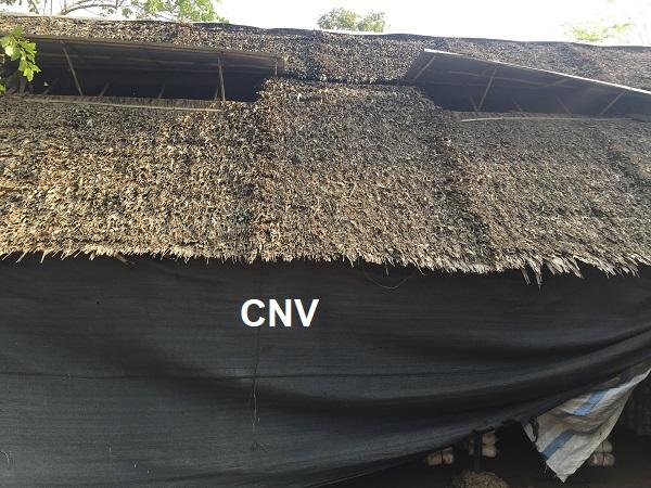 trại trồng nấm bào ngư