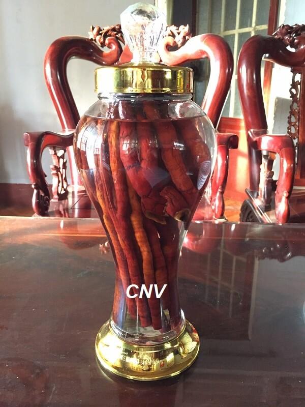 rượu nấm linh chi sừng hươu 1