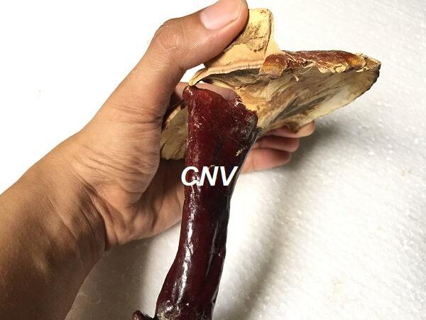 cấu tạo bên trong nấm lnih chi rừng