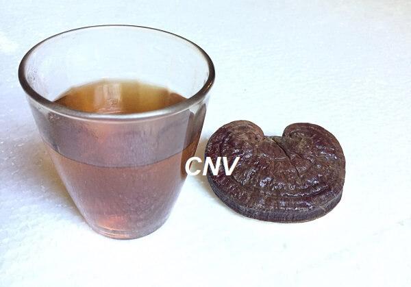 đặc điểm nấm linh chi nhật bản