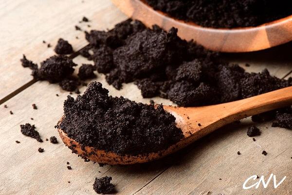 trồng nấm kim châm trên bã cà phê
