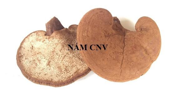Nấm xích chi Việt Nam
