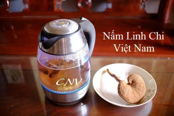 Đánh giá và dùng thử Nấm Xích Chi Việt Nam