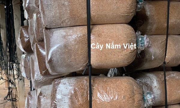 mua phôi nấm bào ngư xám trồng tại nhà